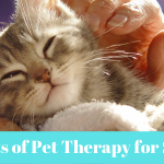 Benefits of Pet Therapy for Seniors