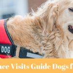 Canfield Place Visits Guide Dogs for the Blind