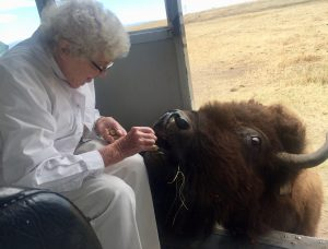 MacKenzie Place Fort Collins Resident Feeds Bison