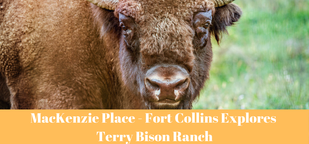 MacKenzie Place - Fort Collins Explores Terry Bison Ranch